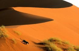 Sipine Sossusvlei, Namibija