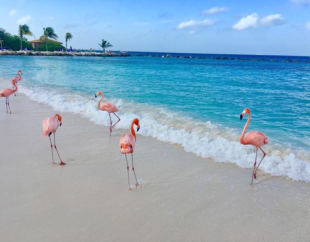 Renaissance Island: čarobni otok na Karibih