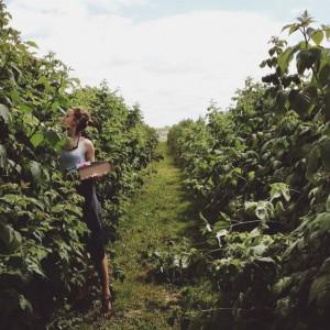 Pojdita nabirat sadje.