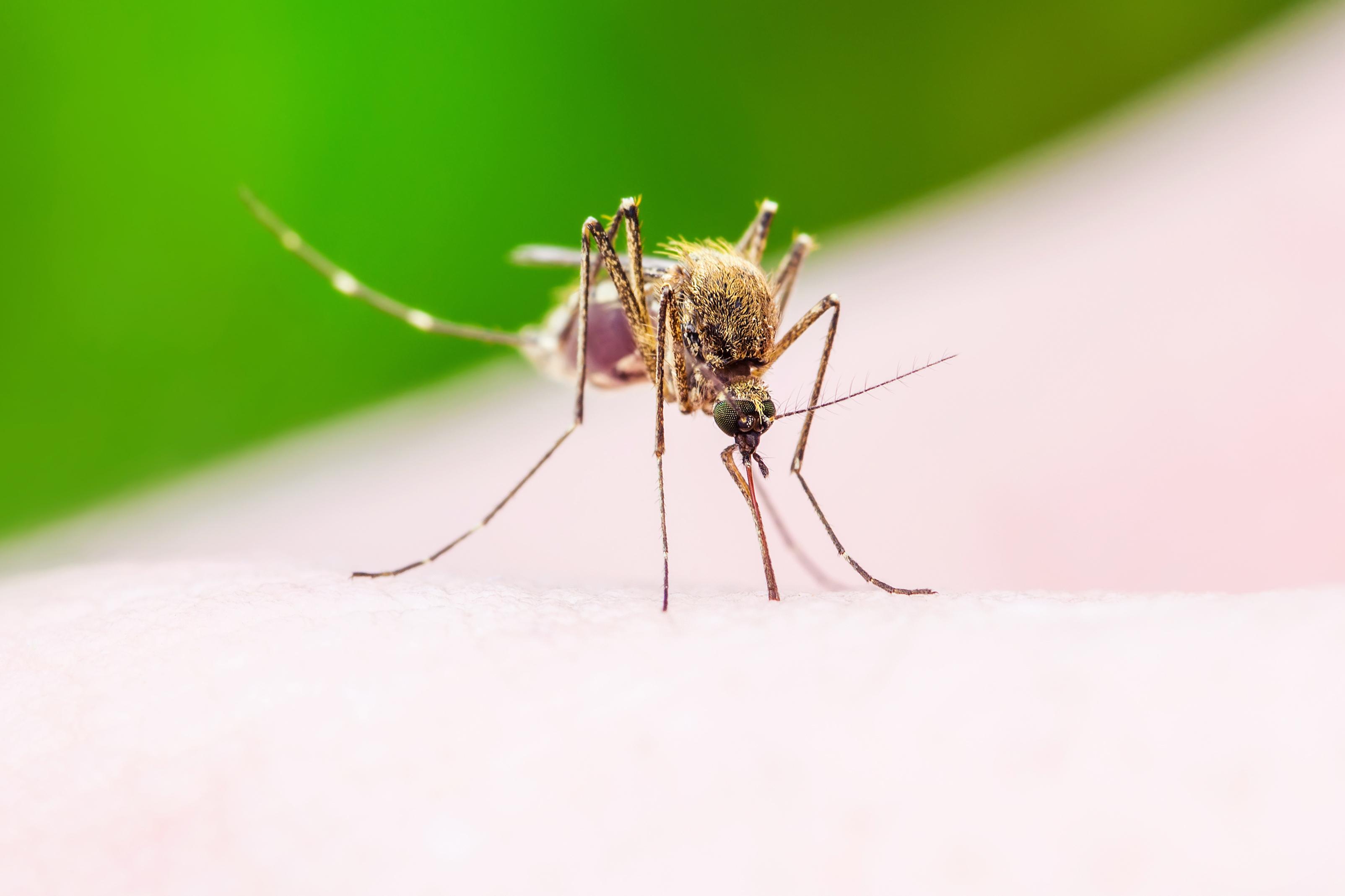 10 razlogov zakaj imajo komarji raje tebe, kot nekoga drugega