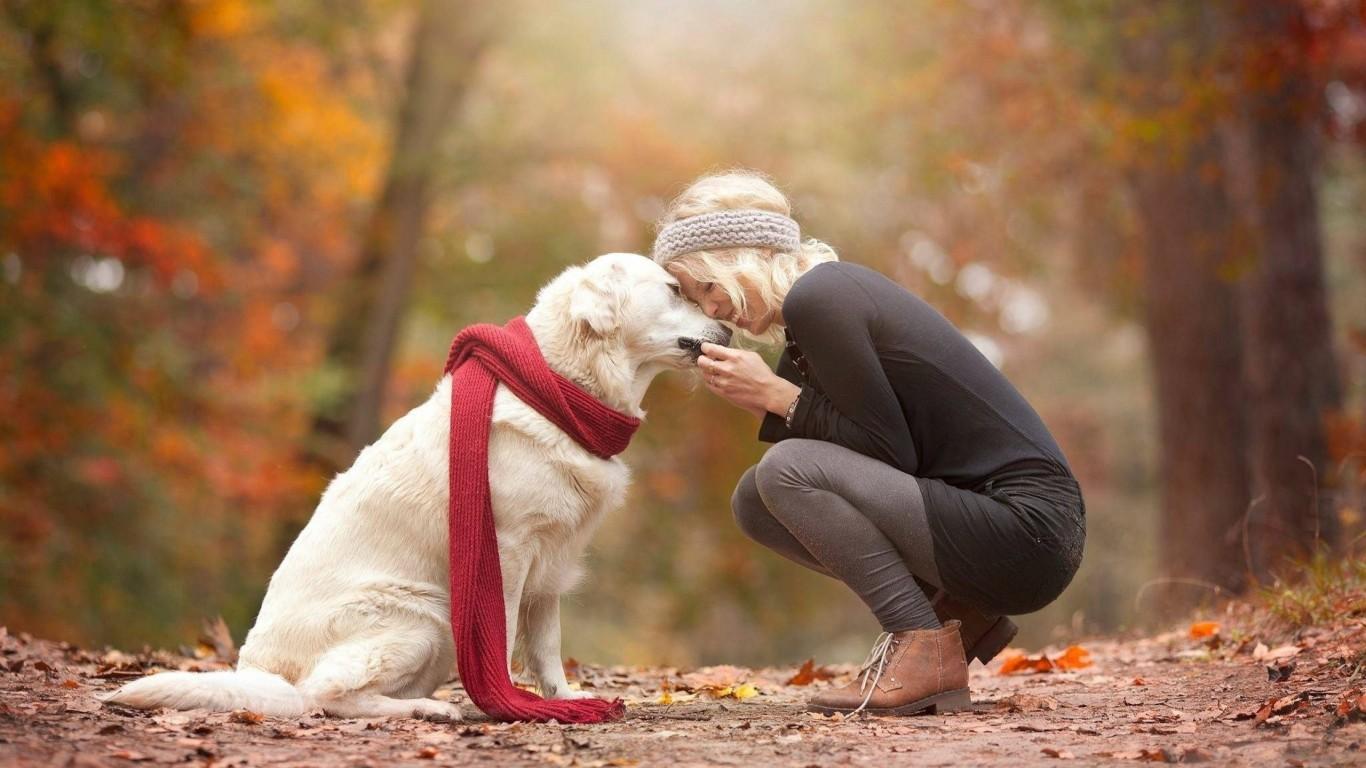 Psu lahko zaupate pri njegovi presoji ljudi