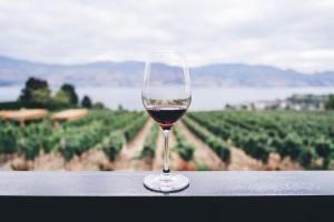 12. Rdeče vino