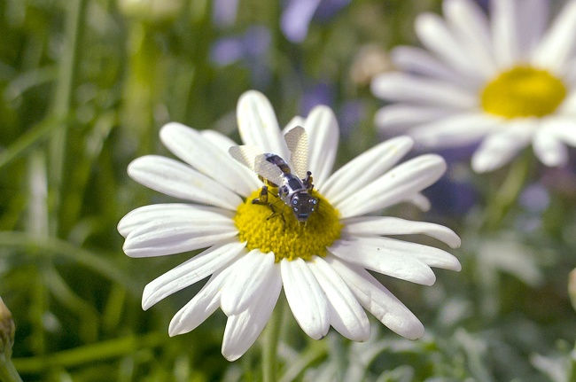 Robotske čebele