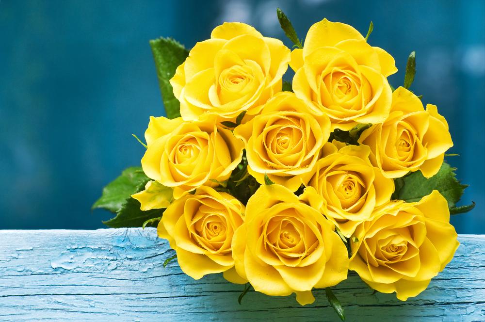 Rumene vrtnice