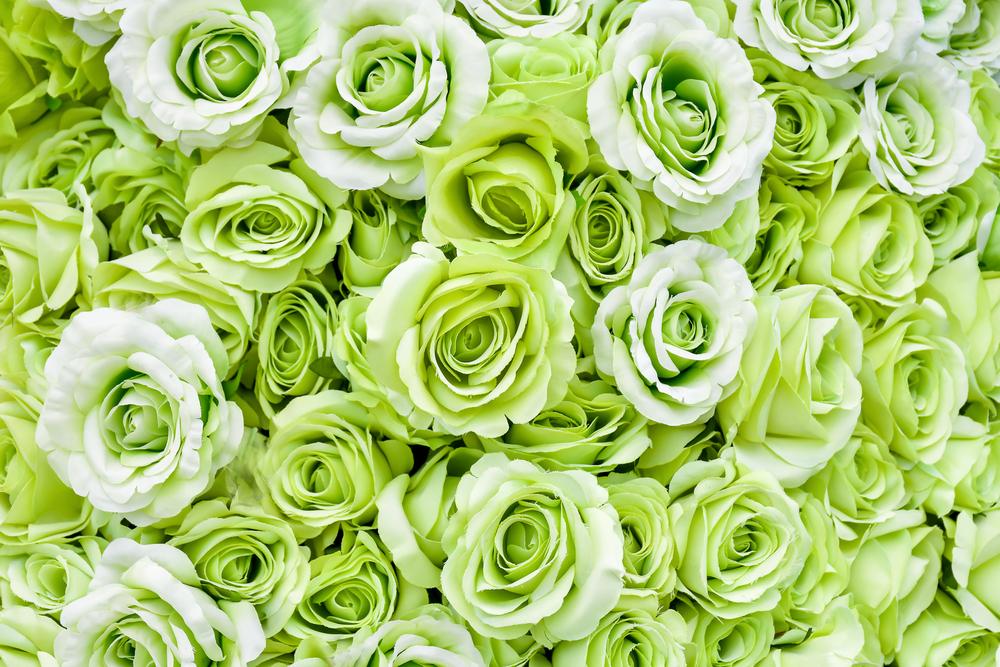 Zelene vrtnice