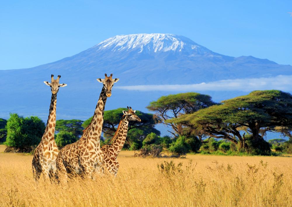 Kilimandžaro, Tanzanija