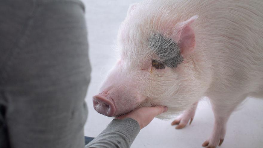 Ali bi bili v zameno za večerjo pripravljeni ubiti žival?