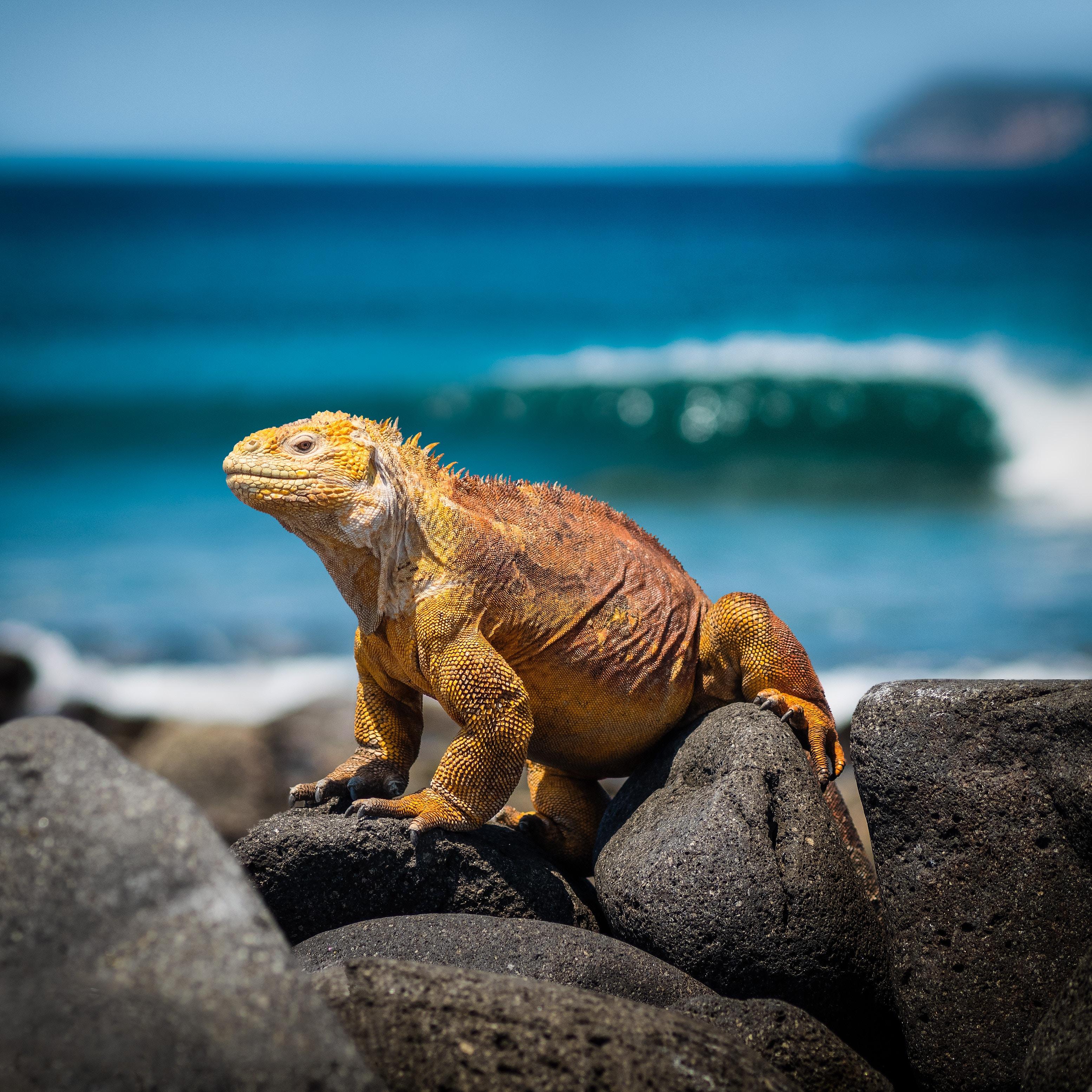 Galapaški otoki, Ekvador