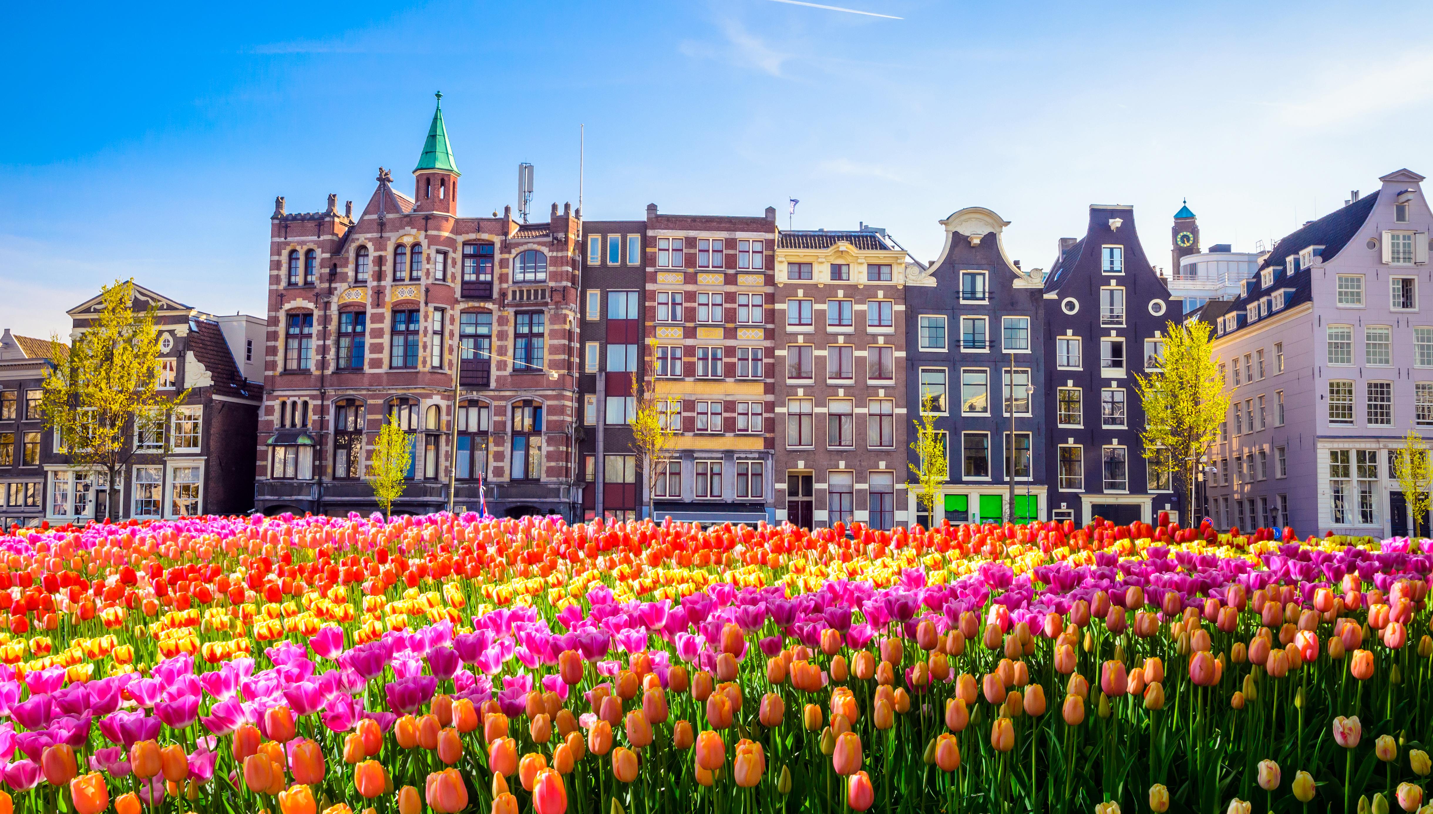 Polja tulipanov, Nizozemska